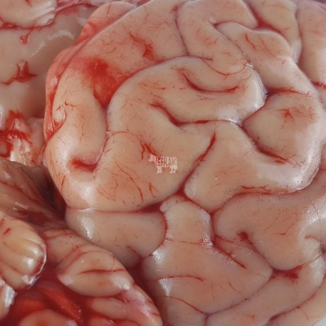 cervelle de veau